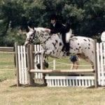 Take A Ride With Augie's Equestrian Team