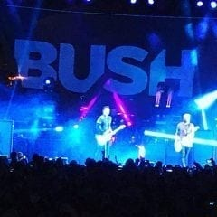 QC Scene: Bush