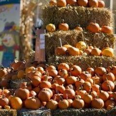 Celebrate with Corn Crib Nursery at Family Fall Festival!