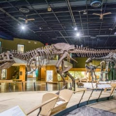 Take a Trip to the Museum With a Virtual Tour