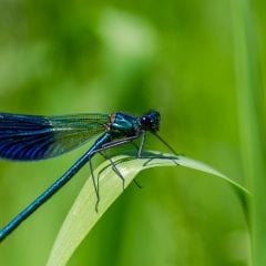 Learn All About Prairie Insects at Nahant Marsh