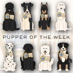Meet Cousin Brucie, The Pupper Of The Week