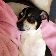 Meet Diesel, Our Pupper Of The Week!