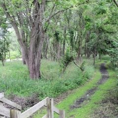 Hike On Down For A Free Guided Hike at Nahant Marsh