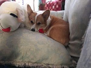 Meet Pookie, Our Pupper Of The Week!