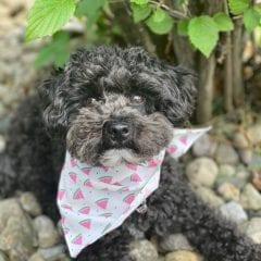 Meet Our Pupper Of The Week... Senor Squeaks!
