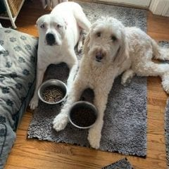 Meet Our Puppers Of The Week... Sofia And Sonni!