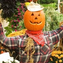 Have Some Scarecrow Sunday Funday!
