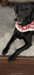 Meet Hale Koa, Our PUPPER OF THE WEEK!