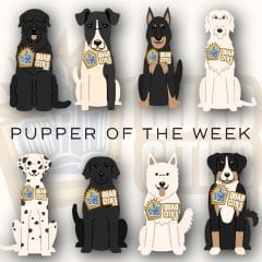 Got A Great Dog? Have Them Featured In Our PUPPER OF THE WEEK!
