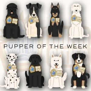 Meet Our Pupper Of The Week: Coda!