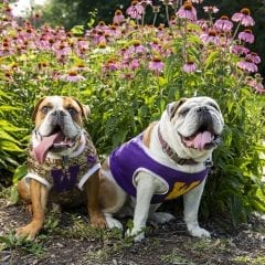 Ray and Rocky Launch Fundraising Effort for Local Animal Shelter