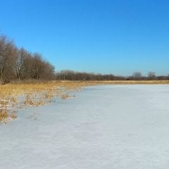 Enjoy A Beautiful Day At Nahant Marsh And Learn About Nature