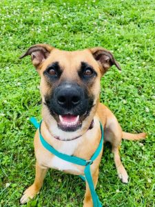 Looking To Adopt A Great New Pet? Check Out The Pet Of The Week From Quad City Animal Welfare Center!